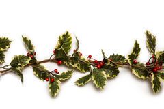 Christmas holly with red berrys Stock Image