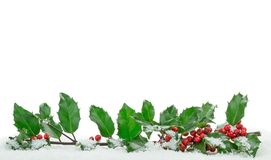 Christmas Holly on Snow. Christmas holly with snow with copy space on a white background stock photo