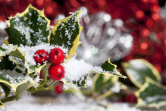 Christmas Holly with Snow Royalty Free Stock Photos