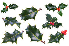 Christmas Holly. A sprig of Christmas holly on a white background stock images