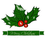 Christmas holly. Stock Photography