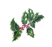 Christmas holly on white. Hand drawn sketch. Christmas holly branch on white. Hand drawn sketch Stock Photos