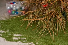 Christmas tree with fallen needles, Xmas aftermath Stock Photo