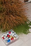 Christmas tree with fallen needles, Xmas aftermath Stock Images