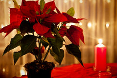 Christmas at home red decor on the table Stock Photos