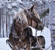 Christmas  horse Royalty Free Stock Photos