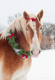 Christmas horse - a Belgian draft with wreath royalty free stock photo