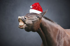 Christmas horse with hat royalty free stock images
