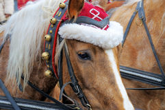 Christmas Horse. Head of a horse wearing a festive hat and bells around his neck Royalty Free Stock Image