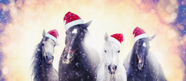 Christmas horses with Santa hat on snow bokeh background, banner. For website stock image