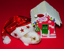 Christmas house of baby bunny. Photo of christmas house of baby bunny Stock Image