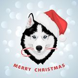 Christmas husky dog. Dog portrait in a red Santa`s hat with candy in mouth. Black and white Siberian husky with blue eyes. Merry Christmas and Happy New Year stock illustration