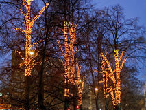 Christmas illumination on urban trees in winter Royalty Free Stock Photography