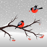 Christmas illustration with bullfinches and rowan tree Stock Photos
