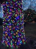 christmas images lights more my portfolio tree Στοκ Εικόνες