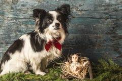 Christmas Jesus and dog Stock Photography