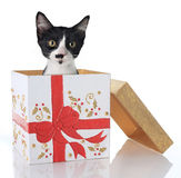 Christmas kitten. Kitten in a Christmas present Stock Photo