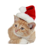 Christmas kitten Stock Images