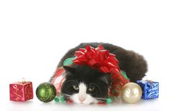 Christmas kitten Royalty Free Stock Images