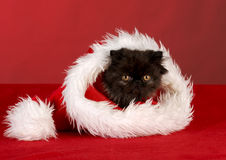 Christmas kitten Stock Photos