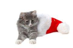 Christmas kitten 2. Christmas kitten close-up Stock Photography
