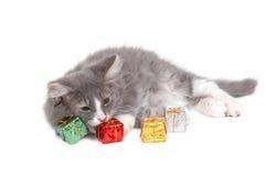 Christmas kitten 3. Christmas kitten close-up Stock Photography