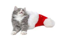 Christmas kitten 4. Christmas kitten close-up Royalty Free Stock Photography