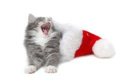 Christmas kitten 5. Christmas kitten close-up Royalty Free Stock Image