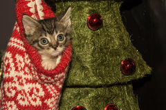 Christmas Kitten. An adorable kitten playing in a Christmas stocking Stock Images