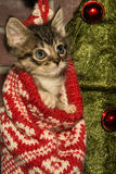 Christmas Kitten. An adorable kitten playing in a Christmas stocking Stock Photo