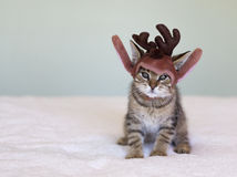 Christmas kitten Royalty Free Stock Photo