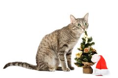 Christmas kitten Stock Image