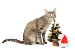 Christmas kitten Stock Image