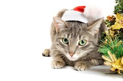 Christmas kitten Stock Photos