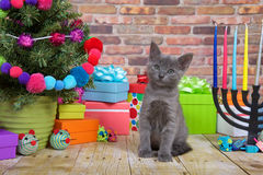 Christmas Kitten Close up. One fluffy gray kitten sitting on a wood floor, Miniature Christmas tree on viewers left with menorah on the right. Pop-culture