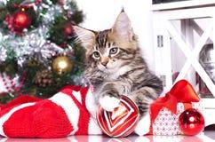 Christmas kitten Stock Images