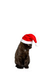 Christmas kitten humor copy space Stock Image