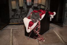 Christmas Kitten Royalty Free Stock Images