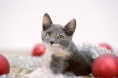christmas kitten lying Στοκ Φωτογραφία