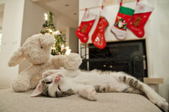 Christmas kitten one open eye. In front of fireplace. Stock Photos