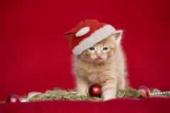 Christmas kitten on red background Stock Photos