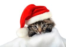 Christmas kitten in Santa stocking hat. And scarf isolated Royalty Free Stock Photos
