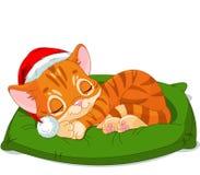 Christmas Kitten Sleeping Stock Photo