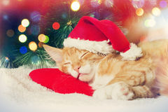 Christmas kitten sleeping Royalty Free Stock Photo