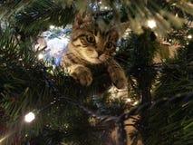Christmas kitten. Tabby kitten in Christmas tree royalty free stock photography