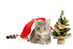 Christmas kitten with tree Royalty Free Stock Photography