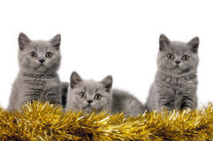 Christmas kittens Stock Photo