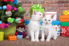 Christmas kittens whispering royalty free stock photography