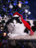 Christmas Kitty. Gorgeous Black and White Green Eyed cat with cute santa cap stock photos