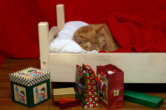 Christmas kitty. Orange tabby sleeping, dreaming of catnip plums while Santa has visited stock photography